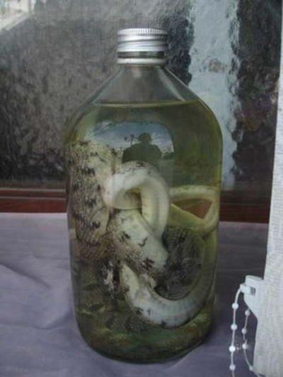 Для виготовлення зміїного вина використовуються кобри і інші рідкісні вимираючі види змій.