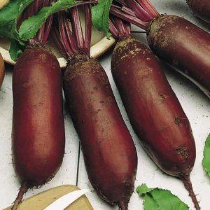Сорт «Циліндра» можна застосовувати при готуванні багатьох блюд