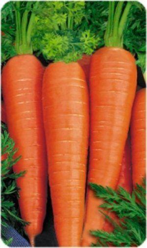 Морква сорти «Вітамінна» може лежати досить довгий час