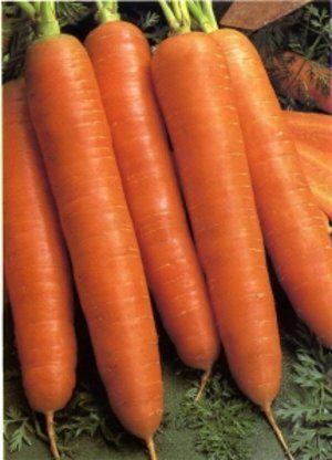 Морква цього сорту зберігається довго
