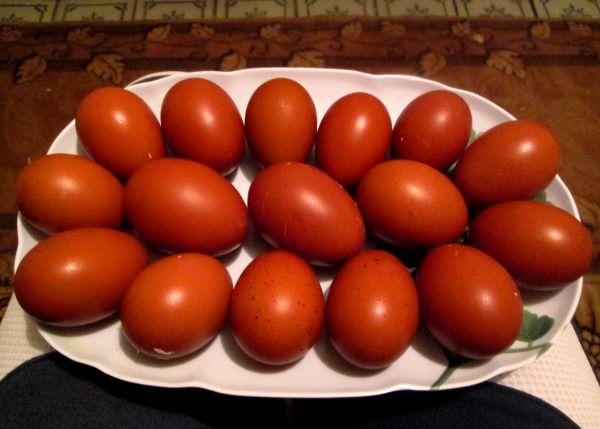 Темні яйця курей Маран
