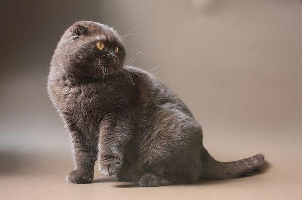 Наснилася кішка Це багато значить!