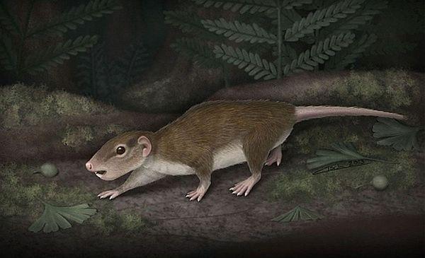 Тваринки, що нагадували гризунів змогли пережити динозаврів